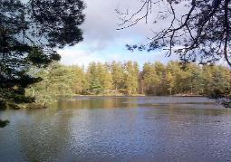 Lake with trees in the foreground and in the background